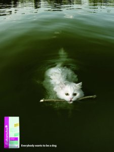 eukanuba_the_cat_2