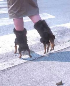 dog-shoes-1
