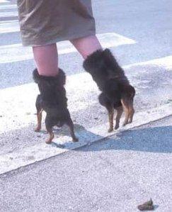 dog-shoes-1