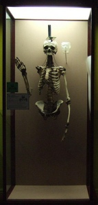 Mary_Bateman_skeleton